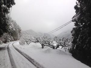 20140214大雪